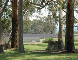 Aloomba Lavender - Accommodation Port Macquarie