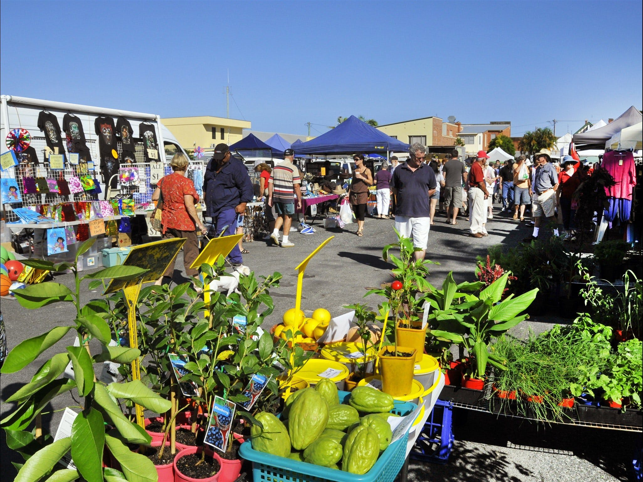 Maclean Community Monthly Markets - Accommodation Port Macquarie
