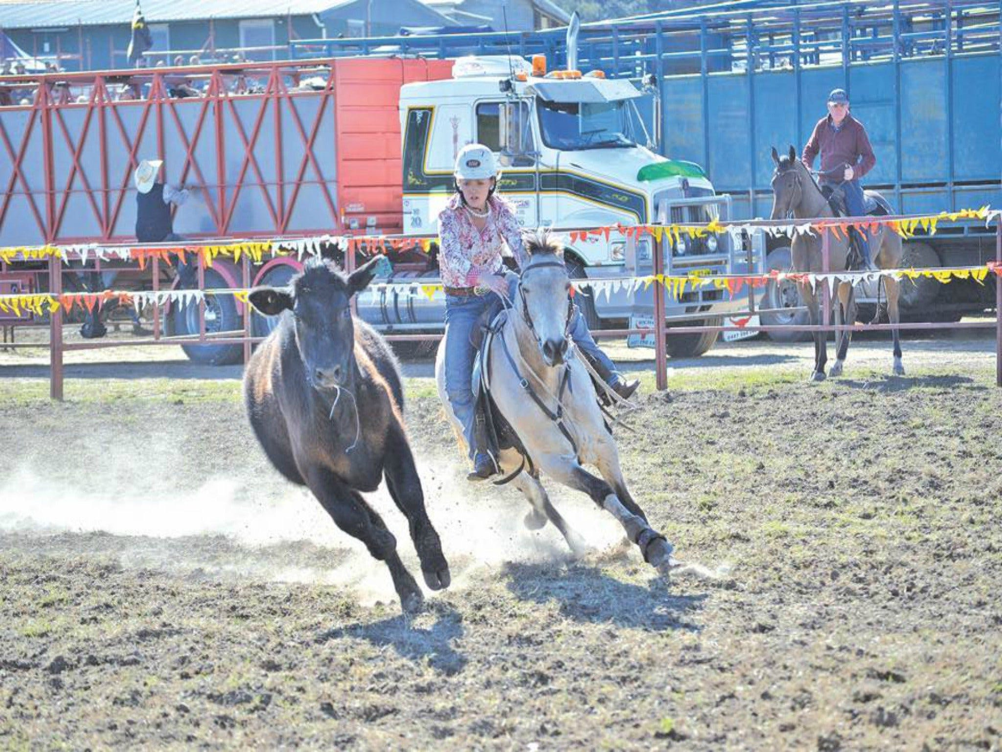 Gresford  Campdraft and Rodeo - Accommodation Port Macquarie