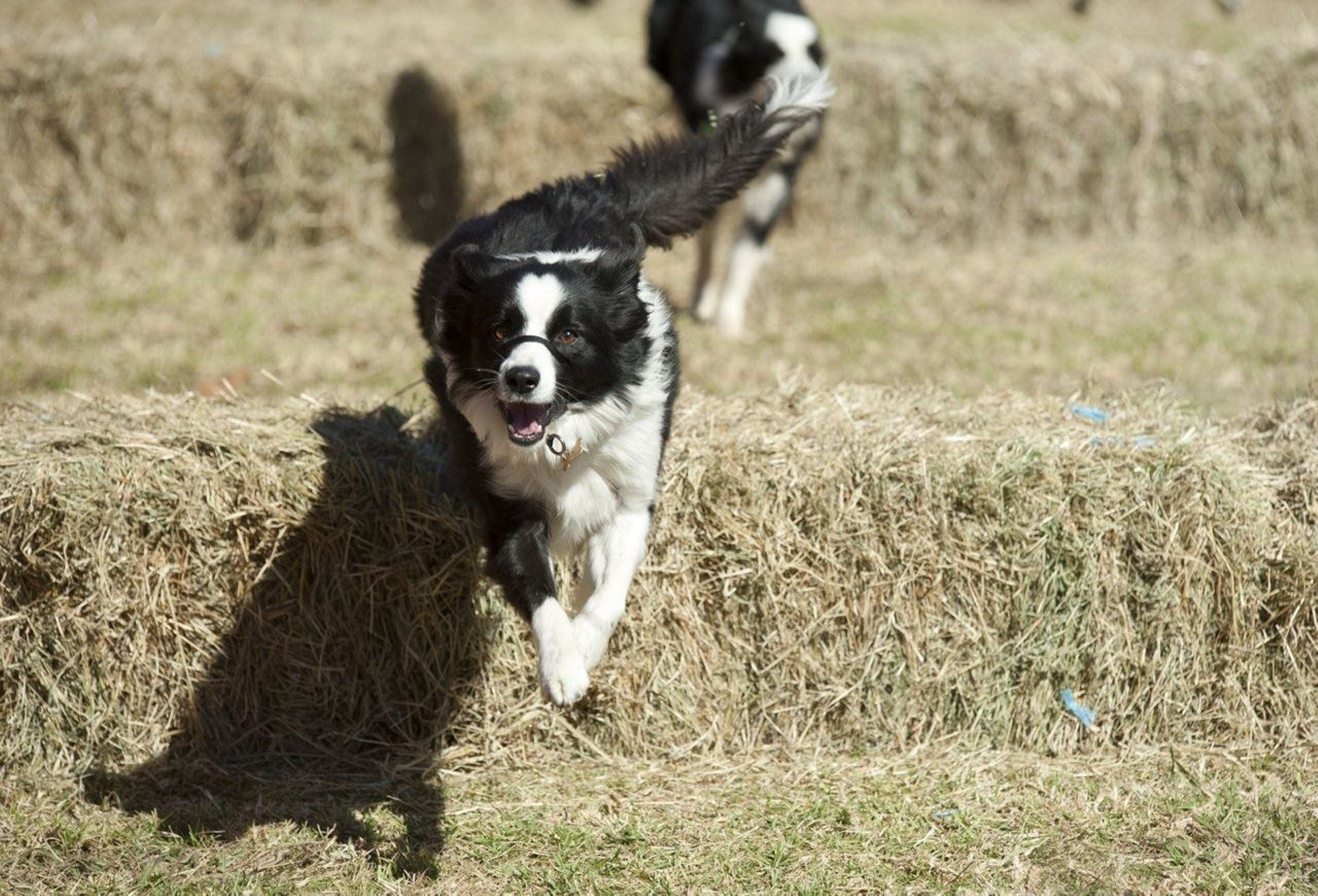 Great Nundle Dog Race - Accommodation Port Macquarie