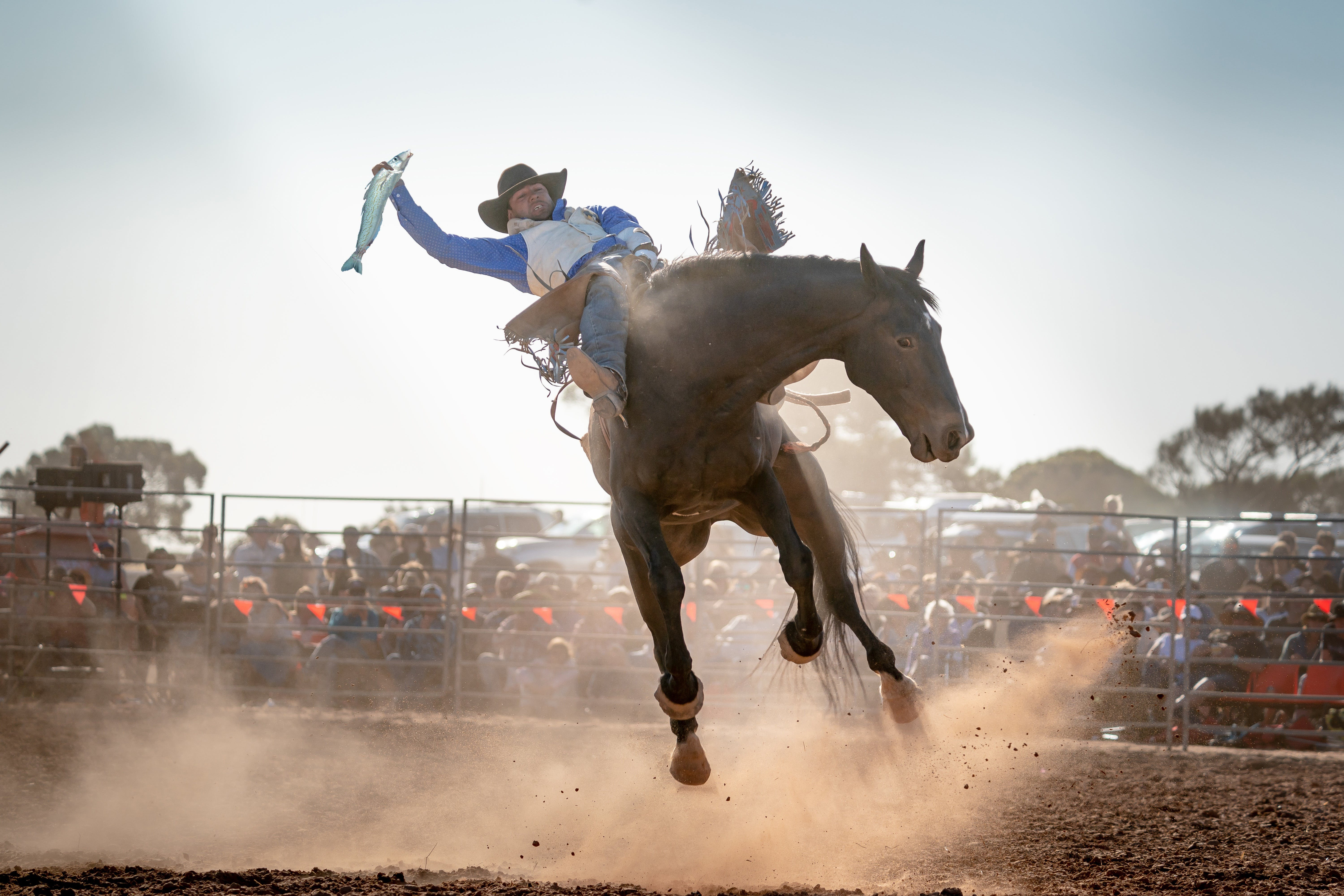 Rodeo by the Sea - Streaky Bay - Accommodation Port Macquarie