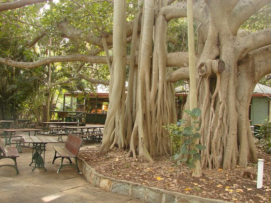 Gardens Tearooms - Accommodation Port Macquarie